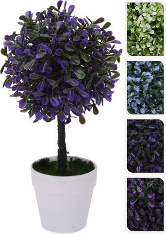 Buxus v květináči barevný