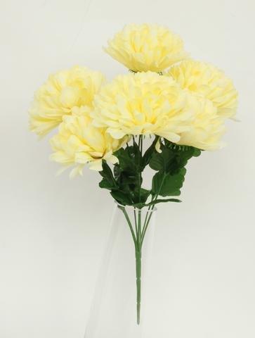 Chryzantéma puget 7 hlav krémová