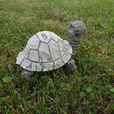 Želva poly šedobílá menší