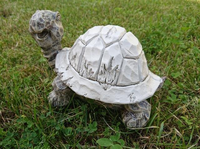 Želva poly šedobílá velká