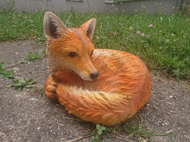 Liška ležící