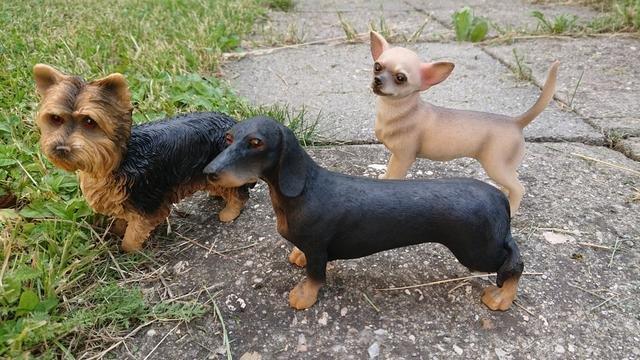 Pes polyston 3 druhy